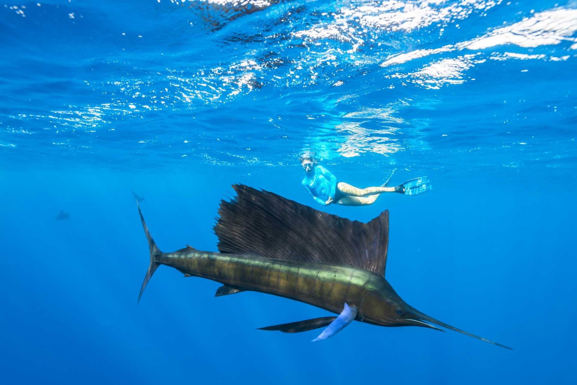 snorkeling with sailfish in the seychelles islands blue safari